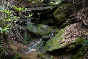Streams and moss covered rocks - Secluded Mountain Cabin on 103 Acres with Pond and Creek (44 of 49)