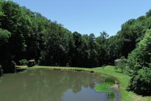 Secluded Mountain Cabin on 103 Acres with Pond and Creek (38 of 49)