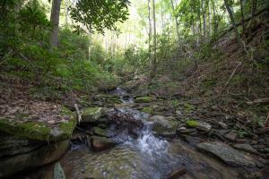 Several Springs feed the Creek  - Secluded Mountain Cabin on 103 Acres with Pond and Creek (42 of 49)