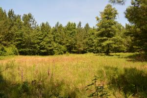 Talladega National Forest Hunting and Timber Investment - Perry County AL