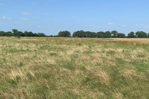 Lush hay pasture for cattle to graze on 22.7 acres in Eustace.  (3 of 5)