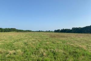 15.2 +/- ac Pasture, Scattered Trees, Building Site  - Henderson County TX
