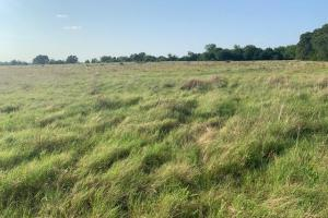 Excellent grassland located in Eustace ISD.  (3 of 4)