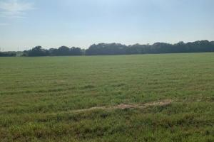 11.5 acres in Henderson County is an excellent investment.  (2 of 2)