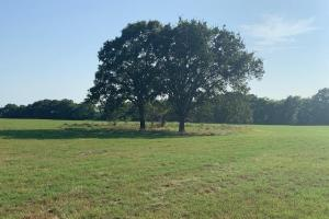 11.2 +/- ac in Eustace ISD, Great Hay Meadow, Building Site  - Henderson County TX