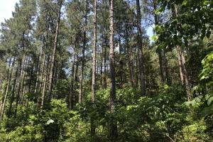 41 Acres Ball Rd. Hunting & Timber Tract in Winston, MS (16 of 21)