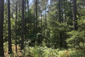 41 Acres Ball Rd. Hunting & Timber Tract in Winston, MS (17 of 21)