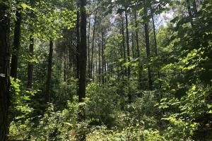 41 Acres Ball Rd. Hunting & Timber Tract in Winston, MS (19 of 21)