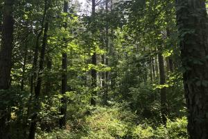 41 Acres Ball Rd. Hunting & Timber Tract in Winston, MS (20 of 21)