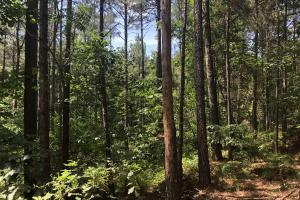 41 Acres Ball Rd. Hunting & Timber Tract in Winston, MS (7 of 21)