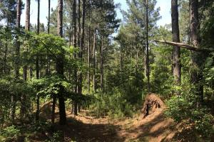 41 Acres Ball Rd. Hunting & Timber Tract in Winston, MS (4 of 21)