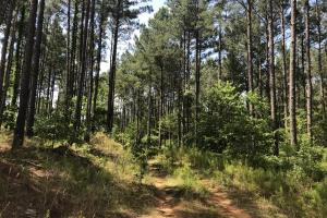 41 Acres Ball Rd. Hunting & Timber Tract in Winston, MS (3 of 21)