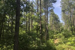 41 Acres Ball Rd. Hunting & Timber Tract in Winston, MS (14 of 21)