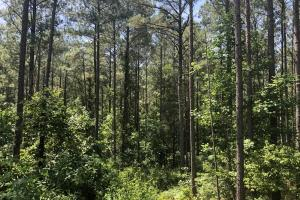 41 Acres Ball Rd. Hunting & Timber Tract in Winston, MS (5 of 21)