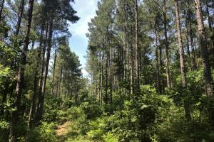 41 Acres Ball Rd. Hunting & Timber Tract in Winston, MS (10 of 21)