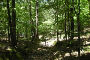 20 Acres of Potential Homesite/Hunting/Recreation in Chattooga, GA (5 of 16)