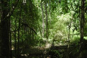 20 Acres of Potential Homesite/Hunting/Recreation in Chattooga, GA (11 of 16)
