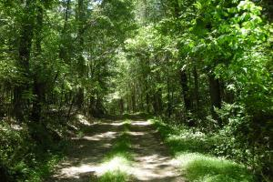 20 Acres of Potential Homesite/Hunting/Recreation in Chattooga, GA (2 of 16)