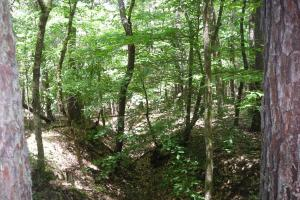 20 Acres of Potential Homesite/Hunting/Recreation in Chattooga, GA (12 of 16)