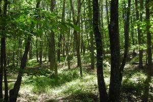 20 Acres of Potential Homesite/Hunting/Recreation in Chattooga, GA (13 of 16)