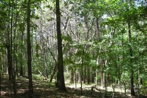 20 Acres of Potential Homesite/Hunting/Recreation in Chattooga, GA (6 of 16)