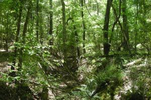 20 Acres of Potential Homesite/Hunting/Recreation in Chattooga, GA (10 of 16)