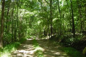 20 Acres of Potential Homesite/Hunting/Recreation in Chattooga, GA (9 of 16)