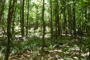 20 Acres of Potential Homesite/Hunting/Recreation in Chattooga, GA (3 of 16)