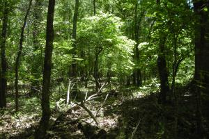 20 Acres of Potential Homesite/Hunting/Recreation in Chattooga, GA (7 of 16)