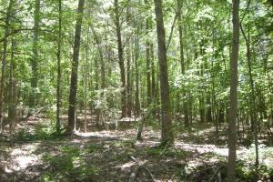 20 Acres of Potential Homesite/Hunting/Recreation in Chattooga, GA (8 of 16)