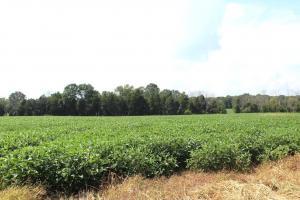 Beautiful Farmland with No Conservation Easements in Fauquier, VA (2 of 8)