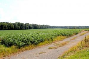 Beautiful Farmland with No Conservation Easements in Fauquier, VA (8 of 8)