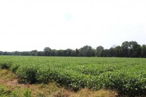 Beautiful Farmland with No Conservation Easements in Fauquier, VA (3 of 8)