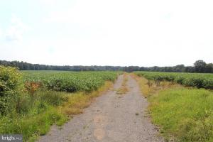 Beautiful Farmland with No Conservation Easements in Fauquier, VA (4 of 8)