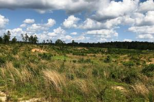 Sandhill Timber and Farm Land - Greene County MS