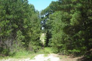 205 Acre Timber Investment/Hunting and Recreation - Haralson County GA