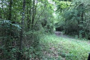 Prime Weekend Get-Away & Hunting Tract in Scott, MS (25 of 32)