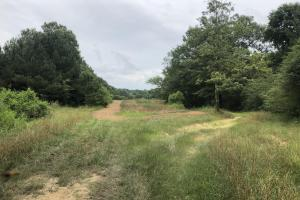 Prime Weekend Get-Away & Hunting Tract in Scott, MS (16 of 32)