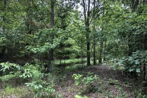 Prime Weekend Get-Away & Hunting Tract in Scott, MS (32 of 32)