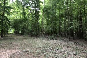 Prime Weekend Get-Away & Hunting Tract in Scott, MS (31 of 32)