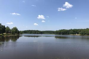 Lake Property With Cabin Sites - Montgomery County MS
