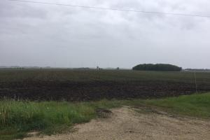 Investment-Grade Farm! Hayfield Twp, Dodge  Co, MN:  from NE'ly line looking southerly and showing field access (5 of 5)