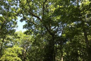 White Oak (4 of 14)