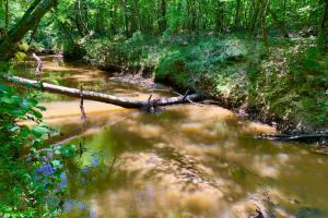 Bogue Chitto Creek and Recreational Tract in Choctaw, AL (4 of 9)