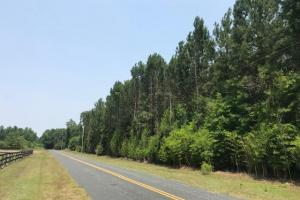Chesney Tract  - Clarendon County SC