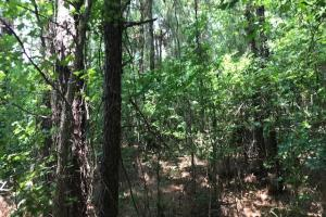 Chesney Tract  in Clarendon, SC (8 of 13)