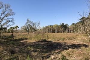 Dale 10 Ac Open Land Rural Residential in Beaufort, SC (3 of 19)