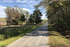 Dale 10 Ac Open Land Rural Residential in Beaufort, SC (12 of 19)