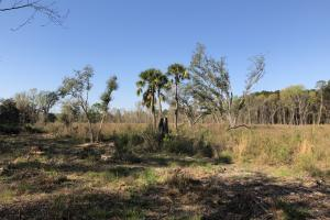 Dale 10 Ac Open Land Rural Residential in Beaufort, SC (4 of 19)