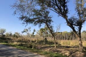 Dale 10 Ac Open Land Rural Residential in Beaufort, SC (5 of 19)